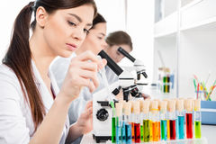 Young female scientists stock images