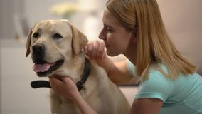 Young female stroking and hugging adorable labrador dog, housepet, best friend. Stock footage stock footage