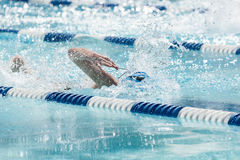 Young Female Swimming Freestyle Stock Image