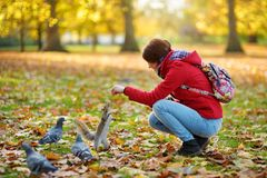 Young female tourist feeding squirrels and pigeon in St James`s Park in London, United Kingdom, on beautiful sunny autumn day. Young female tourist feeding stock photo
