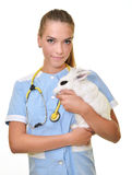 Young female veterinarian doctor carrying a rabbit. At medical clinic royalty free stock photos