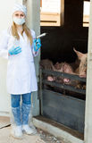 Young female veterinarian with syringe Royalty Free Stock Photography