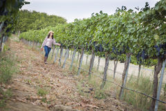 Young Female Vintner Inspecting the Grapes in Vineyard Royalty Free Stock Images