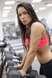 Young female working out with dumbbells in a gym Stock Images