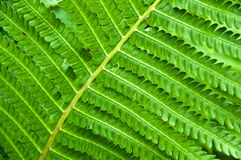 Young fern leaf. Nature background Stock Images