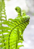 Young fern leaf closeup Stock Photo