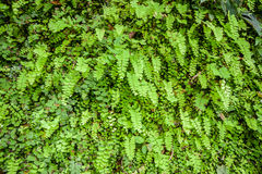 Young fern leaf. Stock Photo