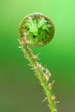 Young fern leaf Stock Photo