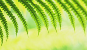 Young fern leaves  macro Stock Photography