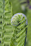 Young fern macro. stock photos