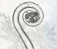 Young fern sketched. Hand draw pencil sketch of a young fern. Big spiral here is a stem and little ones are future leaves. There are also some droplets of dew on Stock Images