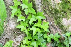 Young fern on tree trunk Stock Images