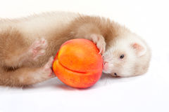Young ferret playing with a peach Stock Images