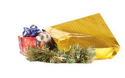 Young ferret wiht Christmas gift Stock Photo