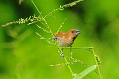 Young finch spice in the park Stock Image