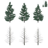 Young firs set Royalty Free Stock Photos