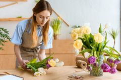 Young florist in apron arranging beautiful tulip flowers. At workplace royalty free stock photo