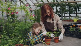 Young florist and her child are hoing soil in pot with green plants using gardening tools and having conversation. Young florist and her beautiful child are stock footage