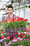 Young florist man working with flowers at a greenhouse Stock Photo