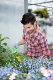 Young florist man working with flowers at a greenhouse Royalty Free Stock Photography