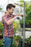 Young florist man working with flowers at a greenhouse Royalty Free Stock Image
