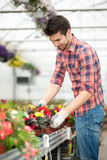 Young florist man working with flowers at a greenhouse Stock Image