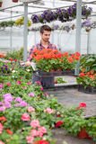 Young florist man working with flowers at a greenhouse Stock Photos