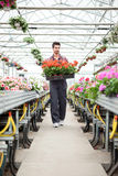 Young florist man working with flowers at a greenhouse Royalty Free Stock Photos