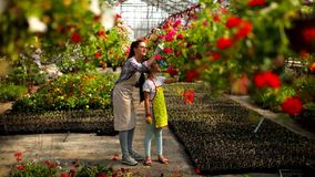 Young florists enjoying work in the greenhouse stock footage