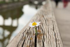 Young flower grows on a wooden surface Stock Photography