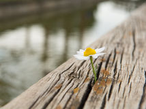 Young flower grows on a wooden surface Stock Image