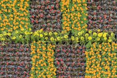 Young flowering seedlings with colorful flowers in pots for flowerbeds of the city, natural floral patterns. Concept of stock images