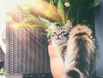Young fluffy cat on balcony , looks at camera. stock photo