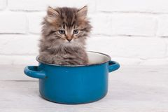 Young Fluffy Kitten In The Pot Royalty Free Stock Photo