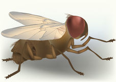 Young fly. Insect irritation life Stock Photo