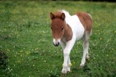 Young foal Stock Photos