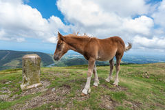 A young foal standing next to a carved rock Stock Photo