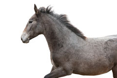 Young foal on white background. Stock Photo