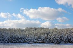 First snow. royalty free stock photography
