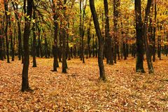 Young forest in autumn Stock Photos
