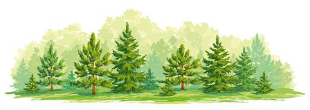 Young forest of pine and fir trees- vector graphic. Border of a forest with young fir and pine trees. Vector graphic. EPS8 Stock Photos