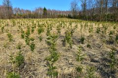 Young forest trees growing royalty free stock photography