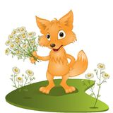 Young fox with a bouquet of camomiles Stock Photo