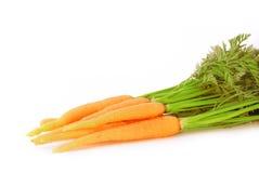 Young fresh carrot. Close-up Stock Photos