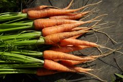 Young fresh carrots on a wooden background royalty free stock photo
