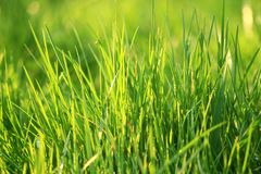 Young fresh green grass is growing. Young fresh green grass with sun light Stock Images