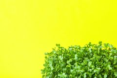 Young Fresh Green Sprouts of Potted Water Cress on Pastel Yellow Background. Spring Gardening Healthy Plant Based Diet Ingredients. Young Fresh Green Sprouts of Stock Images