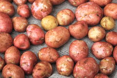 Young fresh potatoes for pattern texture and background Stock Image