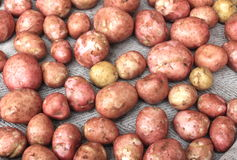 Young fresh potatoes for pattern texture and background Royalty Free Stock Photo