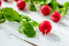 Young fresh radishes on white board. Young fresh radishes on white wooden background Stock Images